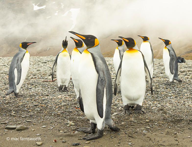 antartica-20.jpg