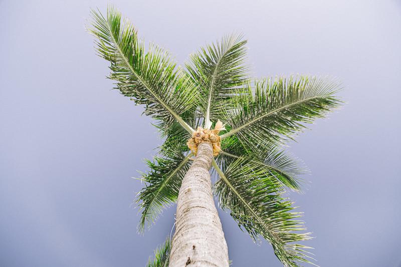 Lush Caribbean Beach Destination Wedding Sandals Royal Bahamian   0003.jpg