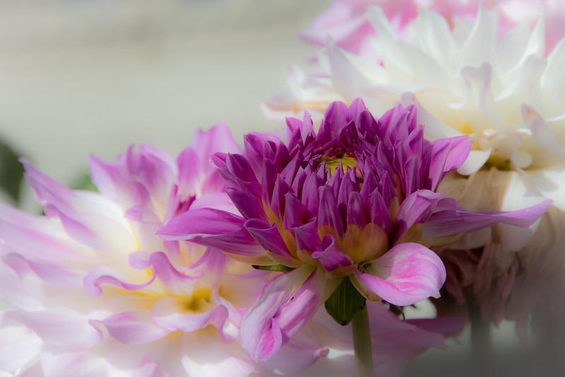 Balboa Park Flowers-1246.jpg