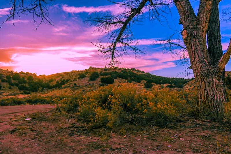 penrose-sunset-tree.jpg