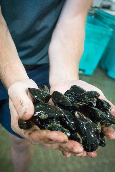 pei mussels.jpg