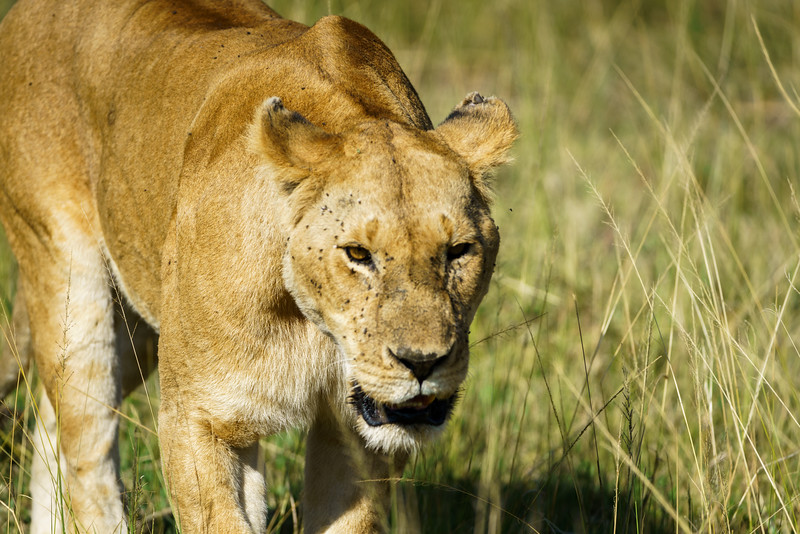 Kenya 2015-03625.jpg