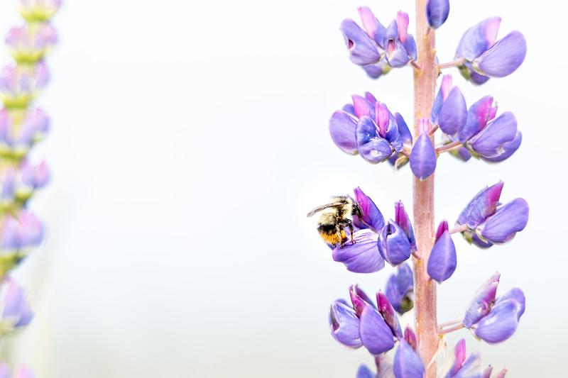 Pollen Inspector