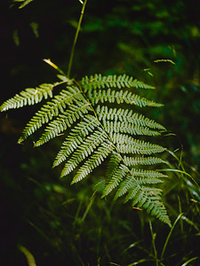 nature in winchuck