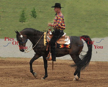 Oakleigh Arabians