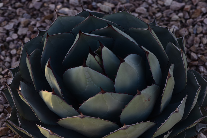 dsc_3281-3282 agave_Panorama1 2x3 PS-.jpg