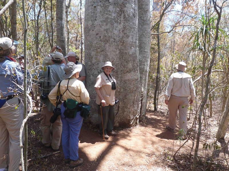 HPLoisAtBaobabInZombitse187 Nov. 13, 10:39 a.m.  P1000187 Lois Evans from Hamilton, Ontario, was energetic and friendly.  This baobab dwarfs her.