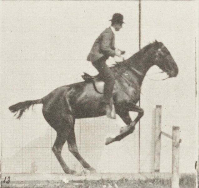 Horse Daisy jumping hurdle, saddled with rider , preparing for the leap