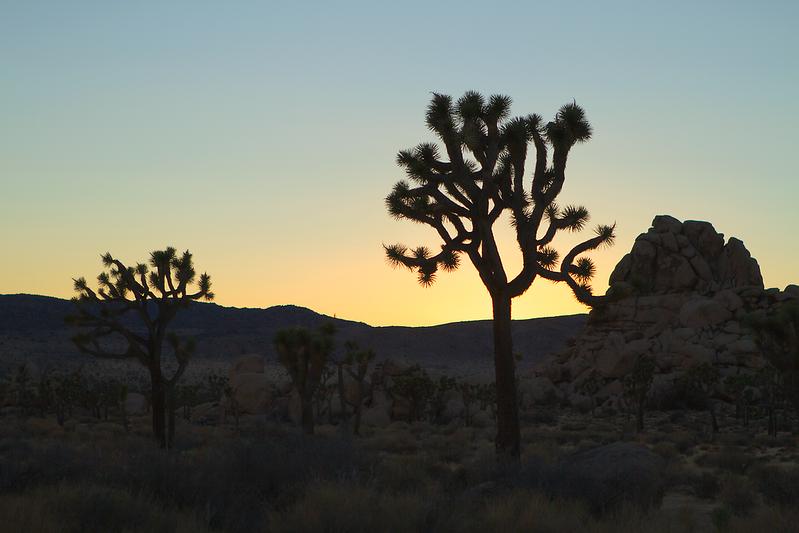 """Joshua Tree"", California"