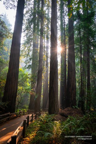 Muir Woods-7161.jpg