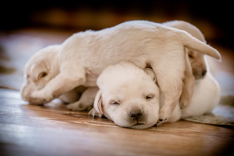 puppypile-168.jpg