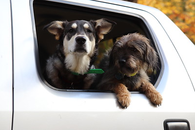 Terry & Dogs in Truck - Camp Road - Oct'19