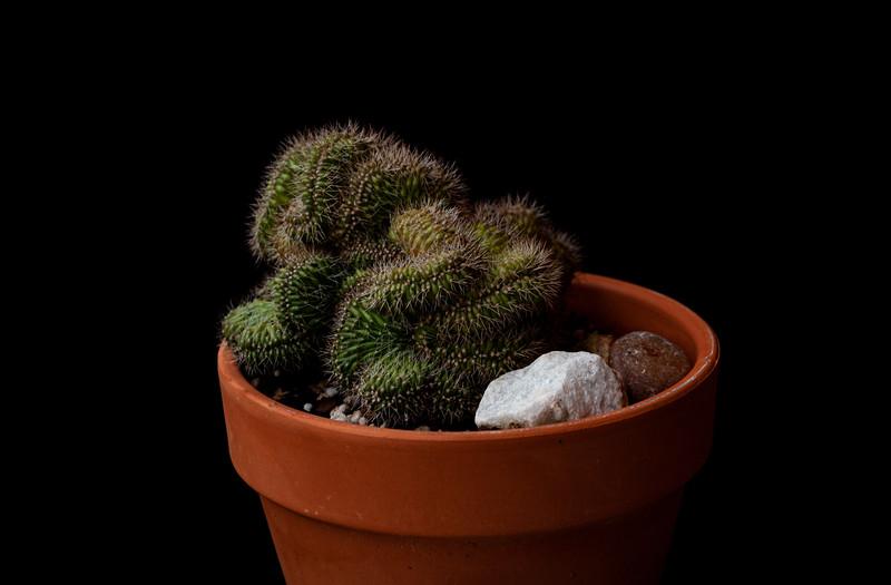 cactus ektachrome 64 051620-3164.jpg