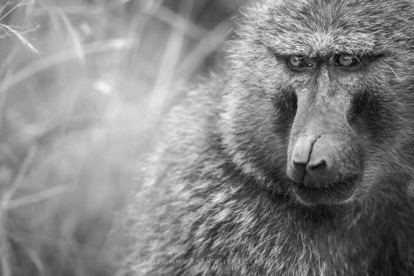 WILDLIFE | Nairobi National Park 2016