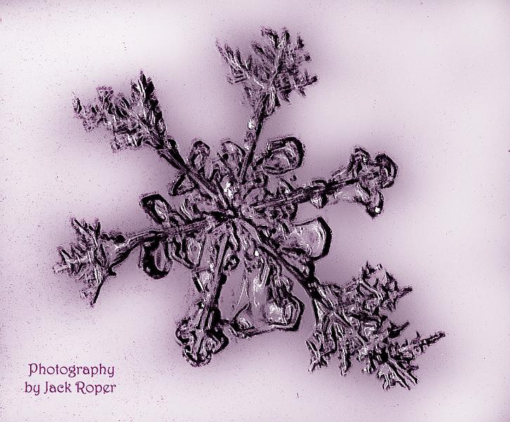 Snow crystal -Jack Roper .jpg
