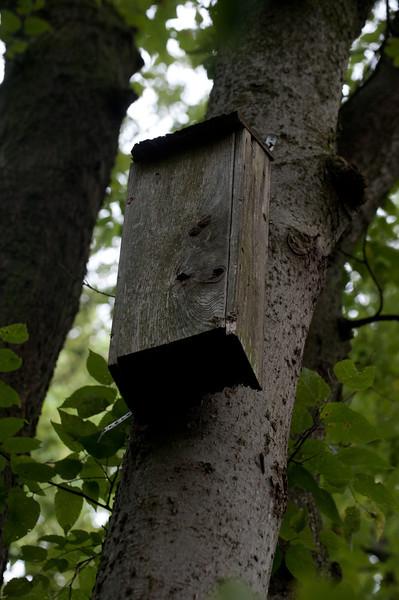 Indiana Bat Habitat Conservation Project