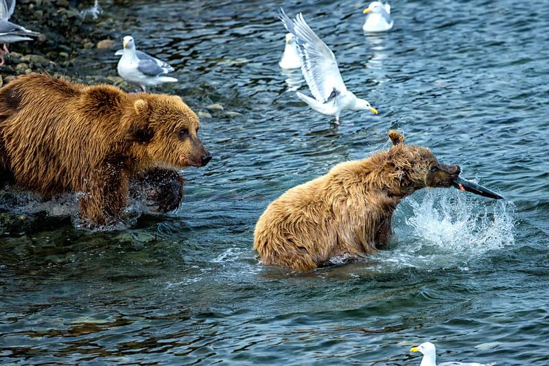 Alaska_2013_FH0T9630.jpg