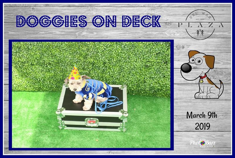 Doggys on Deck17.jpg