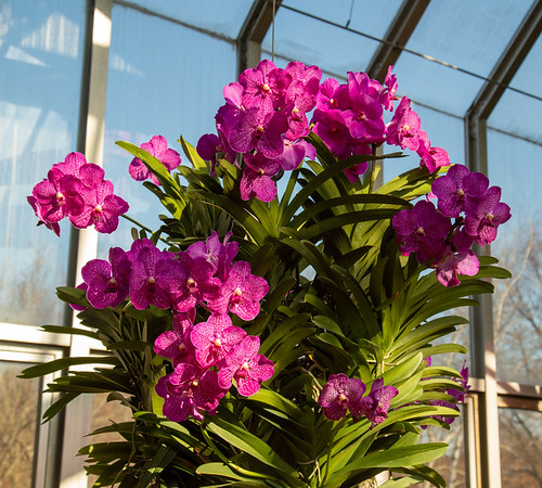 Orchid Show at Chicago Botanic Garden 2020