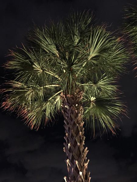 Hard Rock Palm Tree at Night