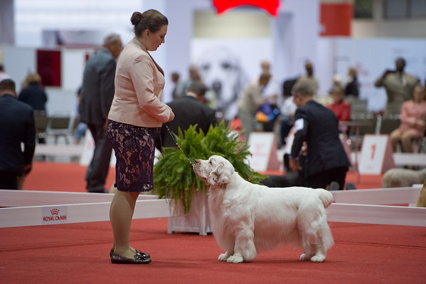 Sporting breeds - misc