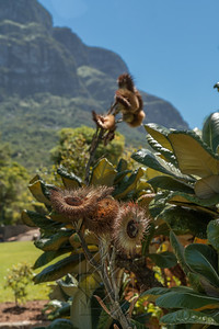 Kirstenbosch National Botanical_2049