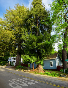 7139_d810a_Flat_St_Ben_Lomond_Real_Estate_Photography-Pano