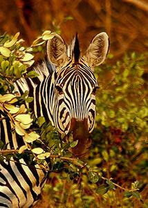 AFRICA 9.jpg