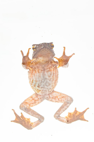 Biodiversity Group, DSC09410