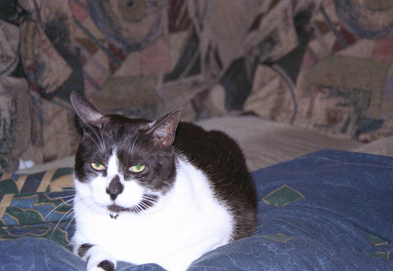 2003 12 - Cats 15.jpg