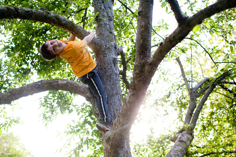 Silas Hortenstine climbs a tree during a graduation party for Jill on May 7, 2011.  (Jay Grabiec)