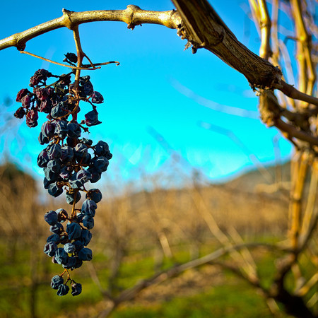Vinyards and Orchards