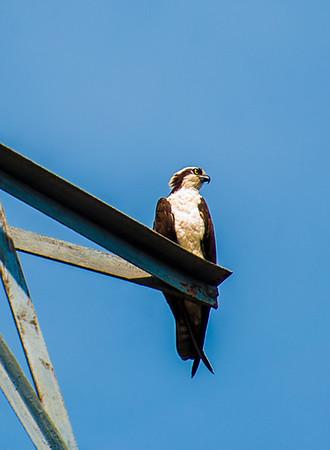 Cape Cod Birds