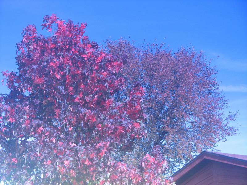 Fall pics 2008 003.jpg