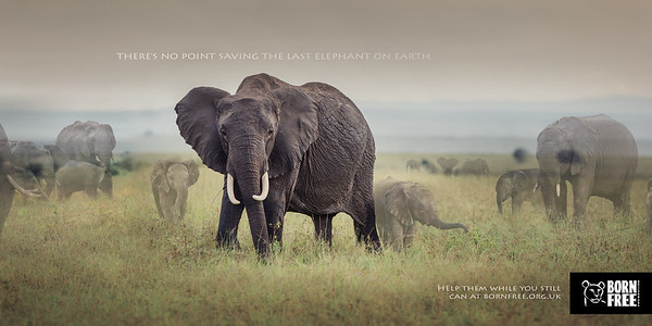 Disappearing Animals Campaign
