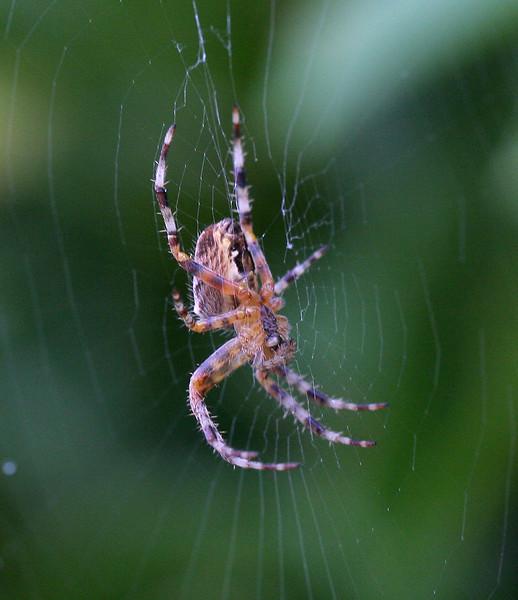 5925 Spider.jpg