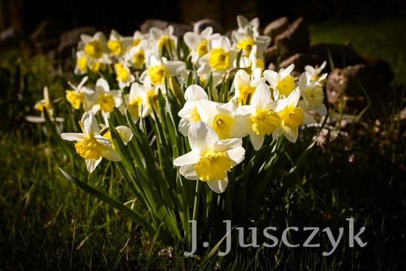 Jusczyk2021-7557.jpg