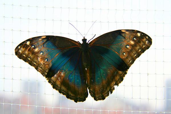 2007 - Tenn. Aquarium (Archive)