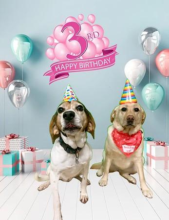 Tinker's 3rd birthday!