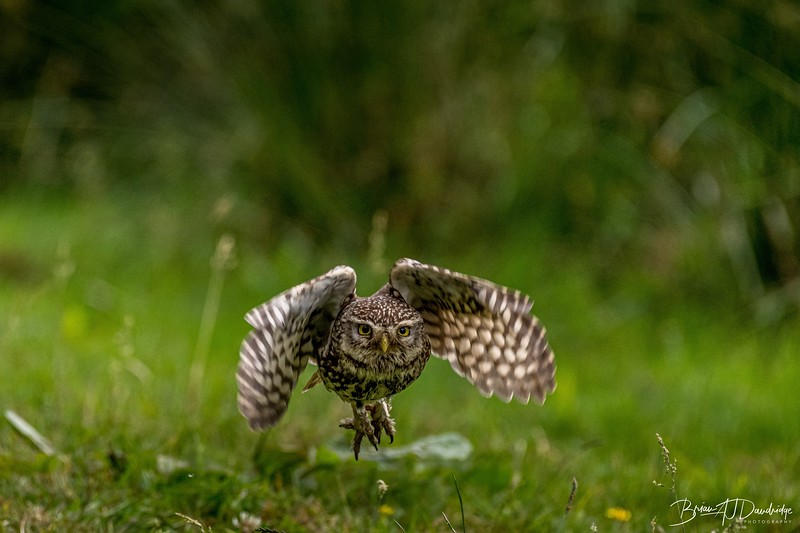 The Little Owl Shoot-6518.jpg