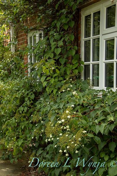 Beechleigh Garden - Jacky O'Leary garden designer_2996.jpg