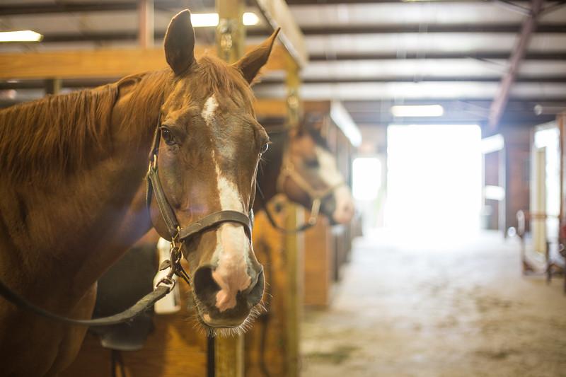 Capital M Performance Horses
