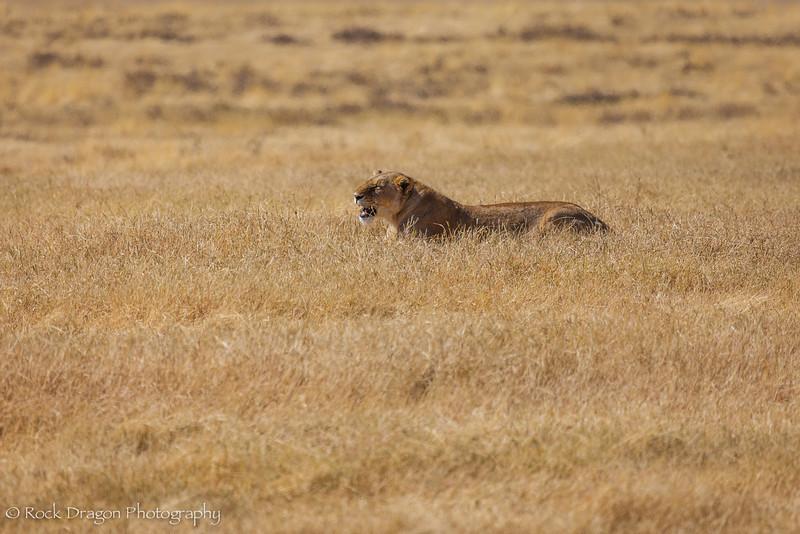 Ngorongoro-11.jpg