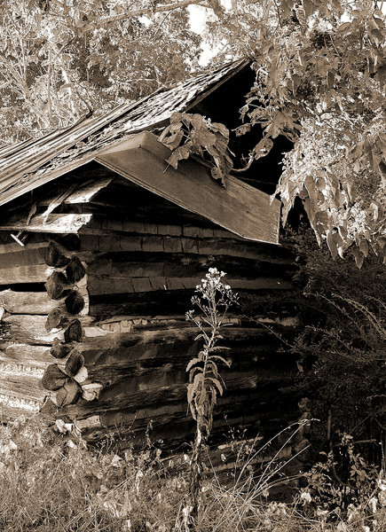 An old barn with sepia tone and Photoshop filters applied.