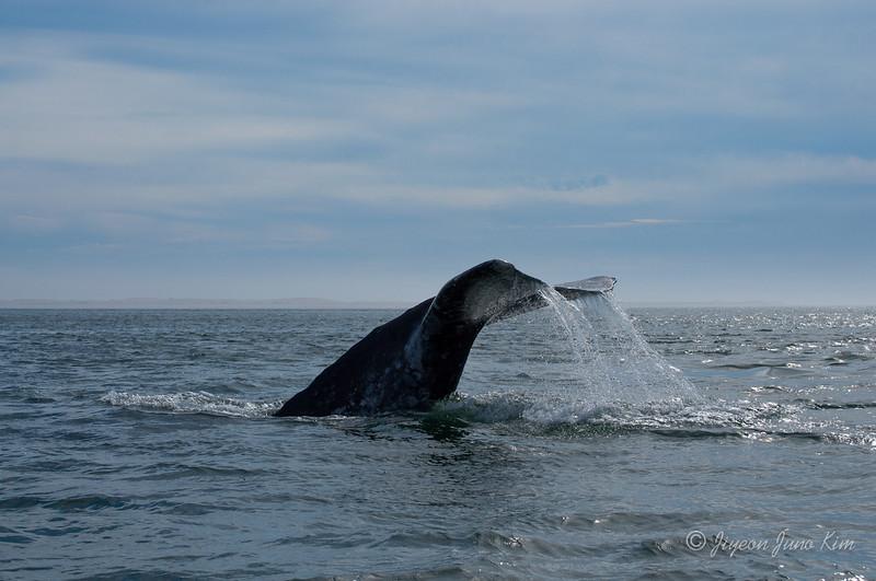 Mexico-Loreto-Whale-2487.jpg