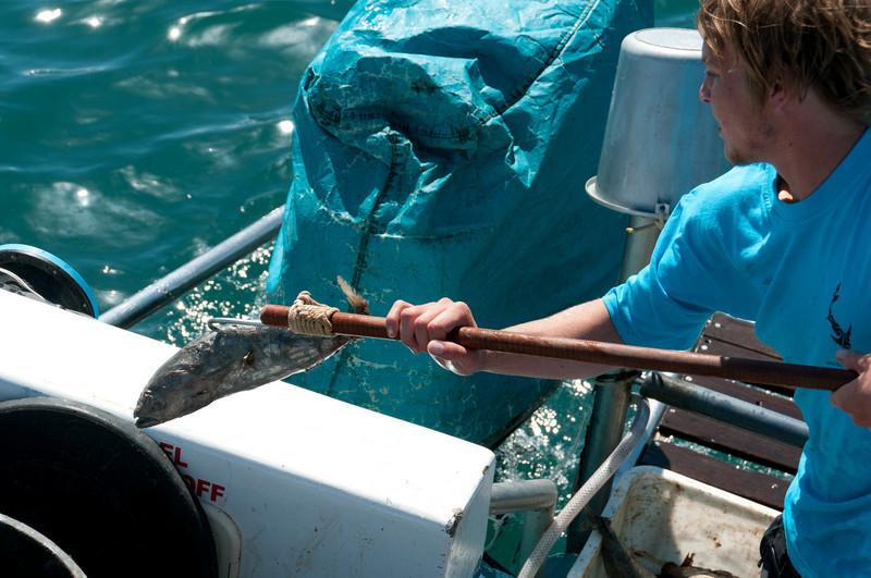 Fishing in Hermanus, South Africa