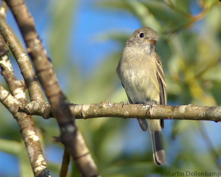 grayishyellowsmallbird.jpg