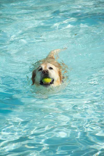 Dog Splash 2012