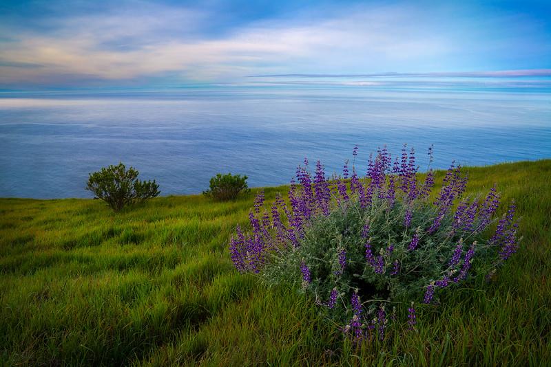 Big_Sur_Wildflowers_Ocean_View_DSC6146.jpg