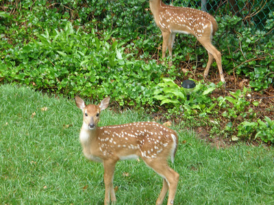 Backyard Critters 2014